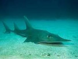 Surprising News About Sharks and Rays