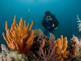 World's Largest Survey of Marine Parks Shows Conservation Can Be Greatly Improved